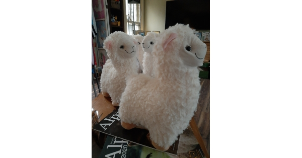 Soft Alpaca Teddy (money box)